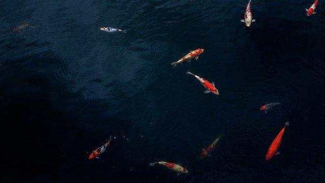 ryby ve vodě