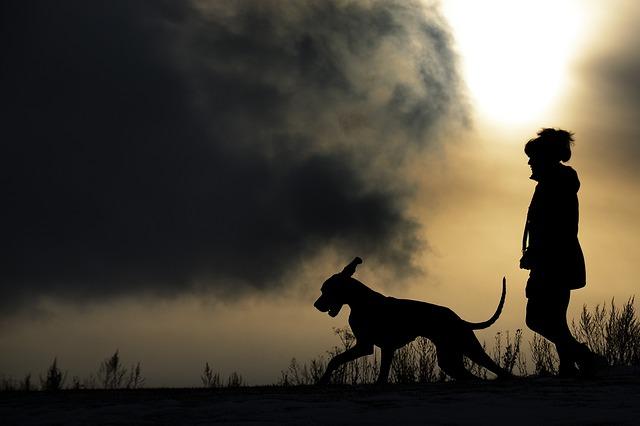člověk a pes